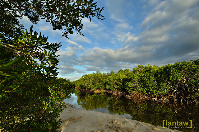 River and Mangrove Forest