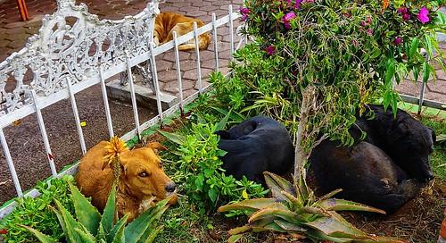 PERROS CALLEJEROS MUERTOS DE FRIO.(COLD DEAD STREET DOGS)