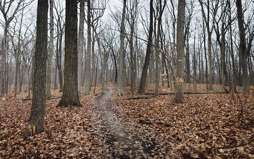 forest trees leaves path trail wisconsin midwest nature canoneos5dmarkiii sigma35mmf14dghsmart panoramic panorama outdoors johnwestrock