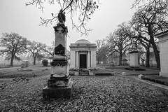 Foggy Morning, Oakwood Cemetery