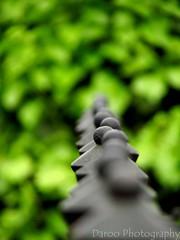 Detalle de la reja/Detail of the fence