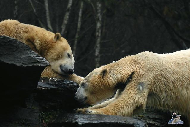 Tierpark Berlin 10.01.2014 36