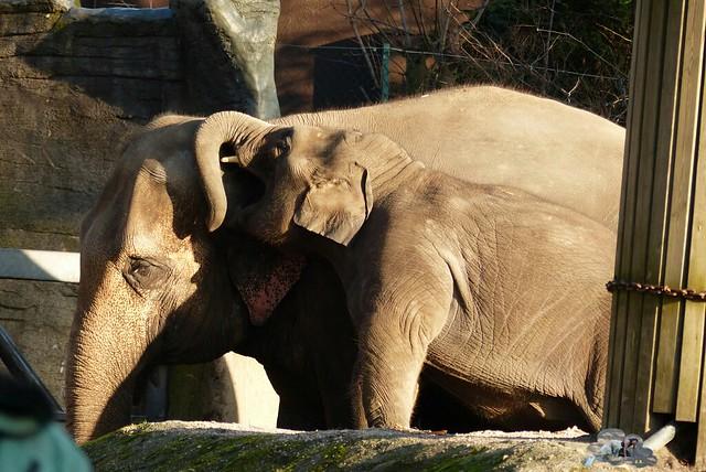 Tierpark Hagenbeck 17.13 _wm