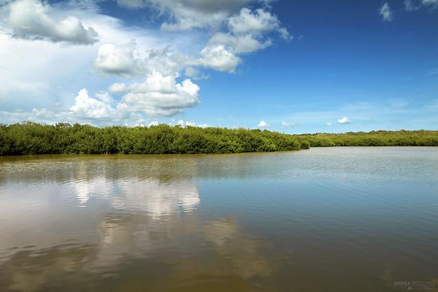West Lake - Everglades National Park, Florida