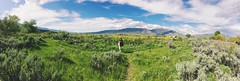 utah fields