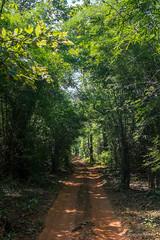 Buffer Zone - Tadoba Andhari Tiger Reserve