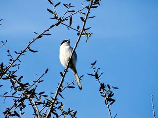 (Best Bird) Honorable Mention - Sunbathing - Heather Priestap