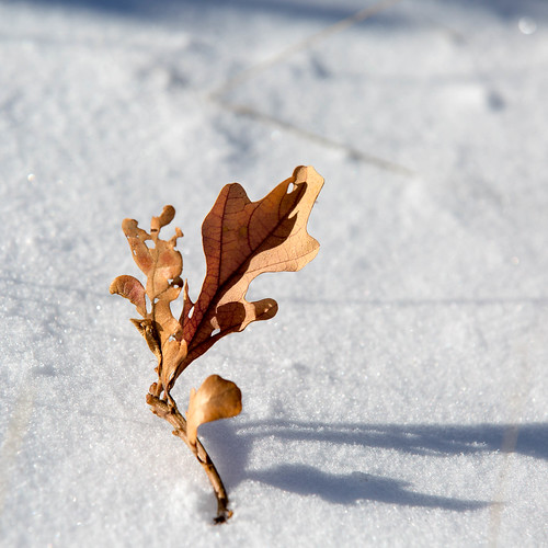 snow newmexico leaves leaf oak nationalforest taos carsonnationalforest