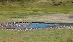 Arusha National Park: Flamingos at Momella Lake