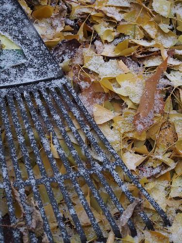 snow on the rake