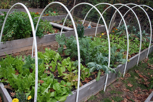 Skippys Vegetable Garden hoops ready for covering