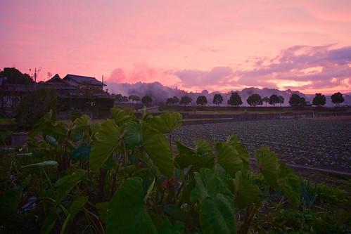 trees sunset field japan landscape sony 日本 木 kagawa 風景 夕焼け 畑 香川 manno apsc a6000 まんのう sel1670z e1670mmf4zaoss α6000 ilce6000 ©jakejung