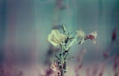 Fiore segreto