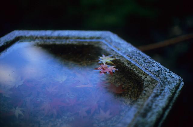 Fallen leaves in the basin