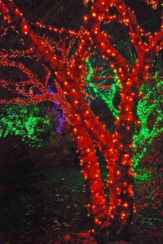 holiday lights, christmas lights, atlanta botanical gardens