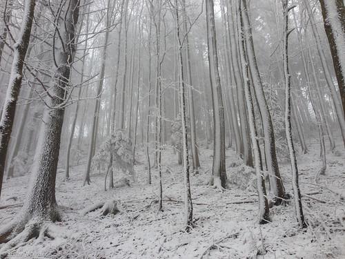 schnee trees winter snow tree nature forest schweiz natur bern kalt wald bäume baum raureif reif schmiedenmatt farnern