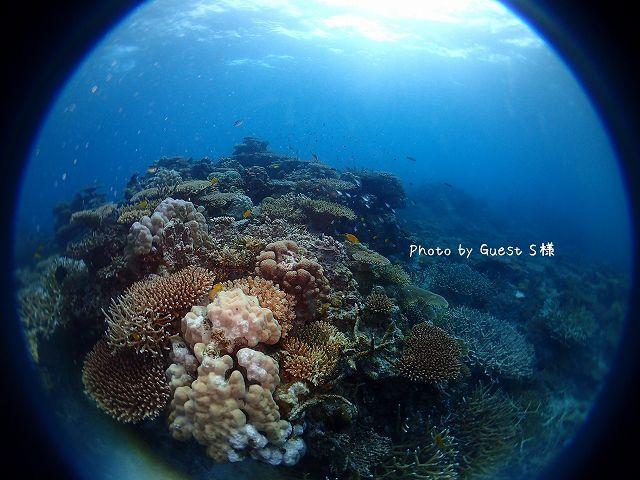 一面サンゴ&熱帯魚にびっくり感動!