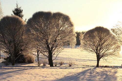 trees winter house suomi finland frost december farm sunny talo talvi winterwonderland winterlandscape laukaa puut maatila joulukuu aurinkoinen ef24105mmf4lisusm kuura valkola talvimaisema canon7d anttospohja talvenihmemaa juhanianttonen