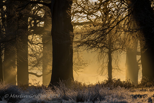 wood morning trees winter light orange sun sunlight white mist colour nature grass leaves yellow sunrise woodland landscape outside dawn countryside early woods frost december branch view country trunk rays 100400mm richmondpark img201412310817361862