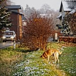 2015-01-22 um 15-52-29 - Hund sucht Mäuse