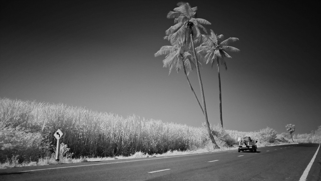 Palm Road and truck