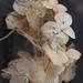 Winter Hydrangea by Pretty Petal Studio