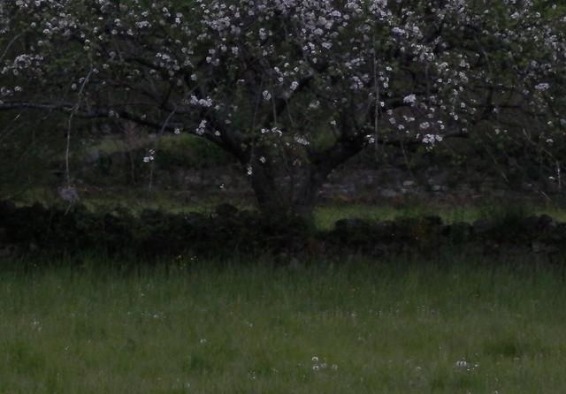 Melancholy Spring