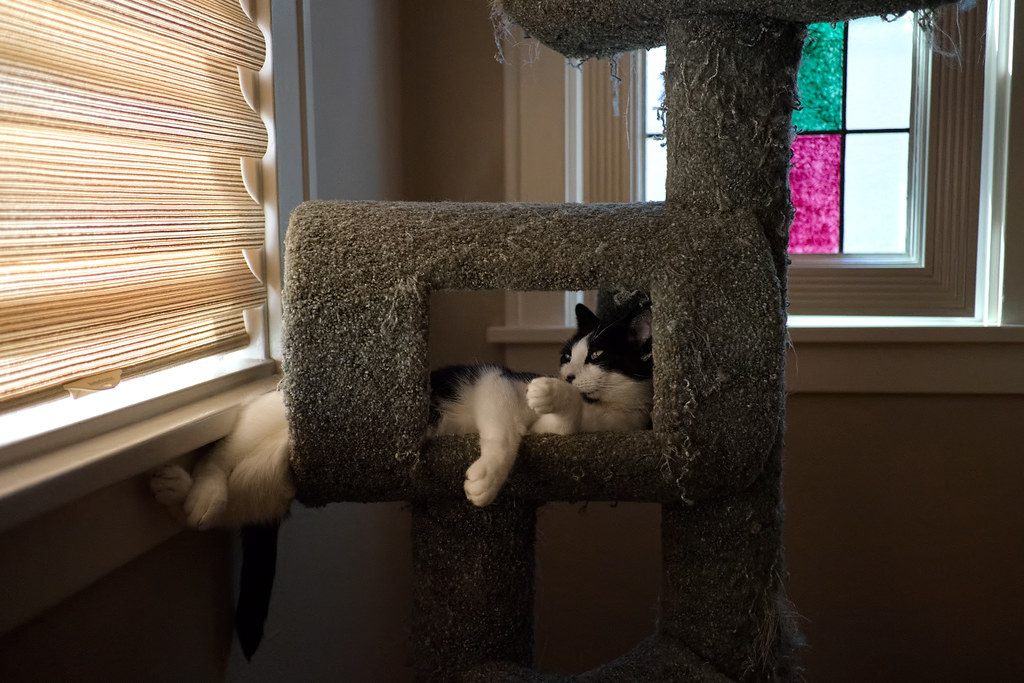 Our cat Boo sleeps in the cat tree in a relaxed pose