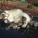Cat on a Hot Tin Roof by RoystonVasey