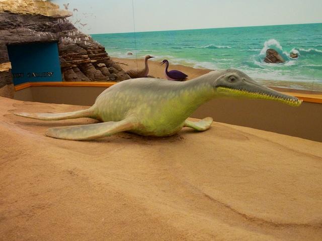 Short-Necked Plesiosaur (Dolichorhynchops)
