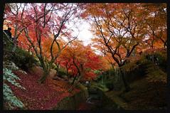 日本京都[南区]-東福寺.42