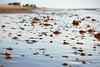 Beachcombing II