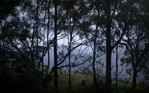 landscape silhouettes hillside tamborinemountain sequeensland queensland australia australianlandscape mounttamborine