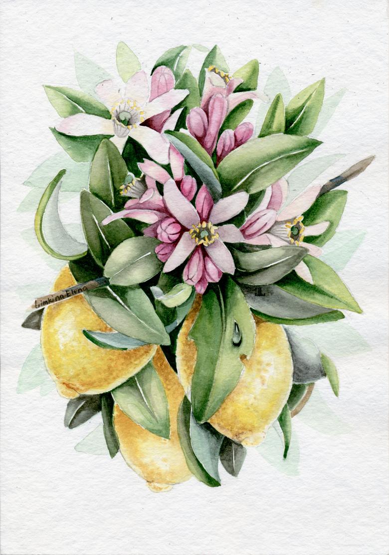Lemons_780