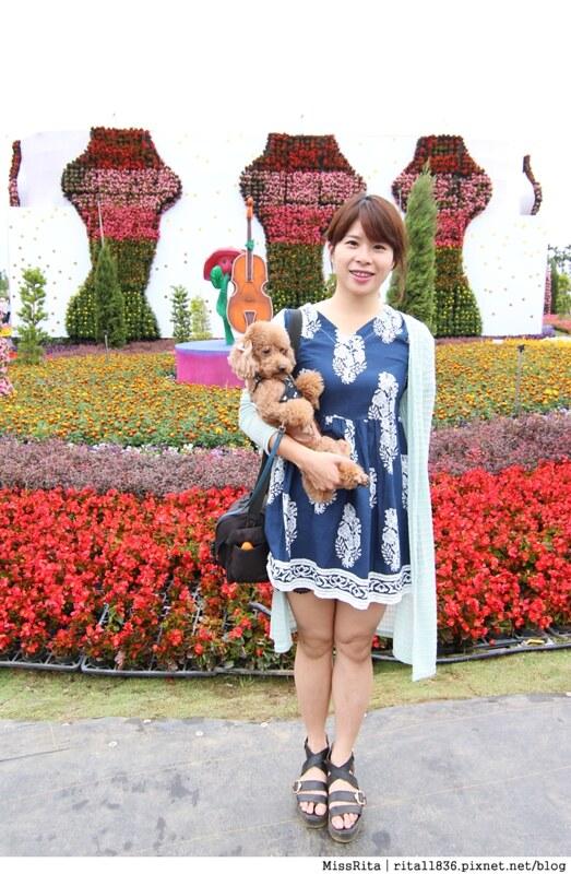 2014新社花海57