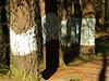 Bosque Pintado de Oma (14)
