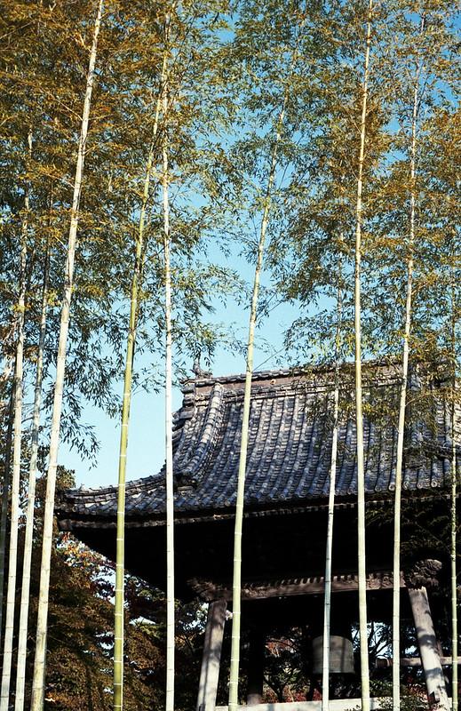 修禅寺 Shuzen-ji Temple