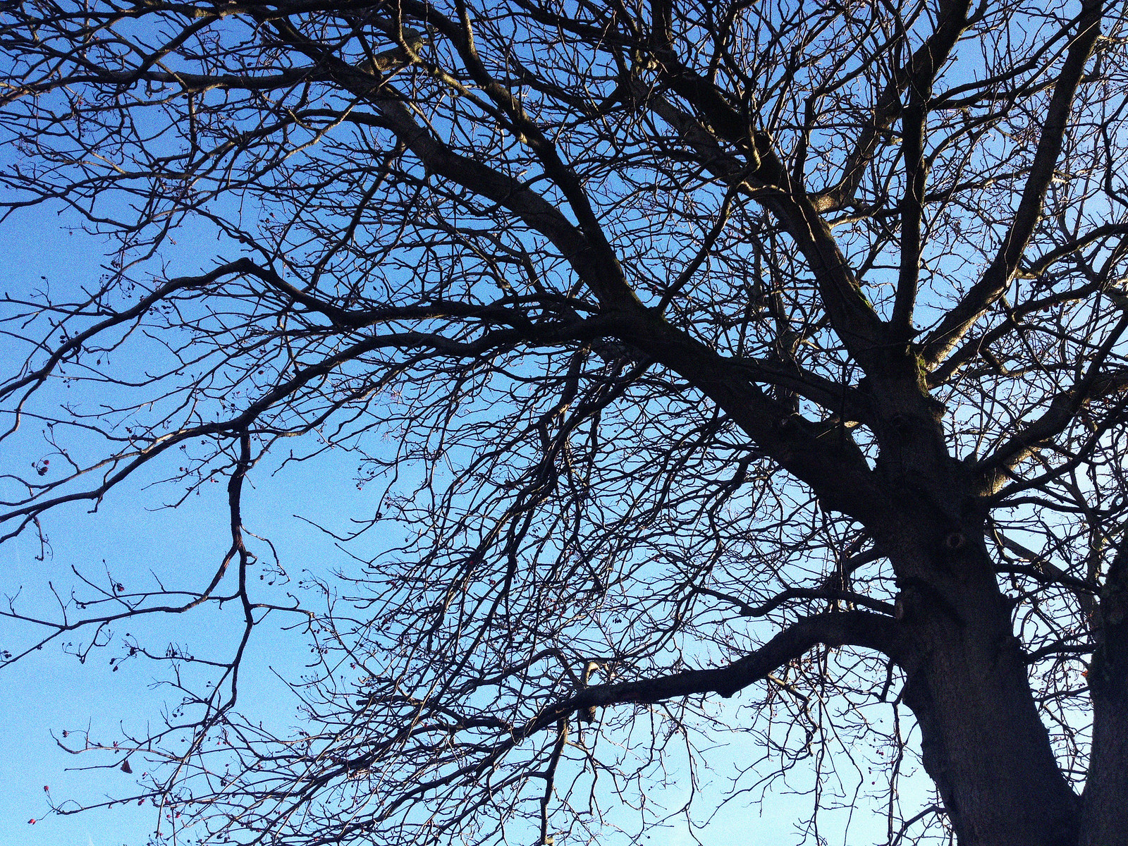 The Blue Sky and The Tree