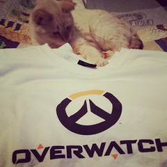 Rosie approves of her dad's new #overwatch tee. #kitty #cat