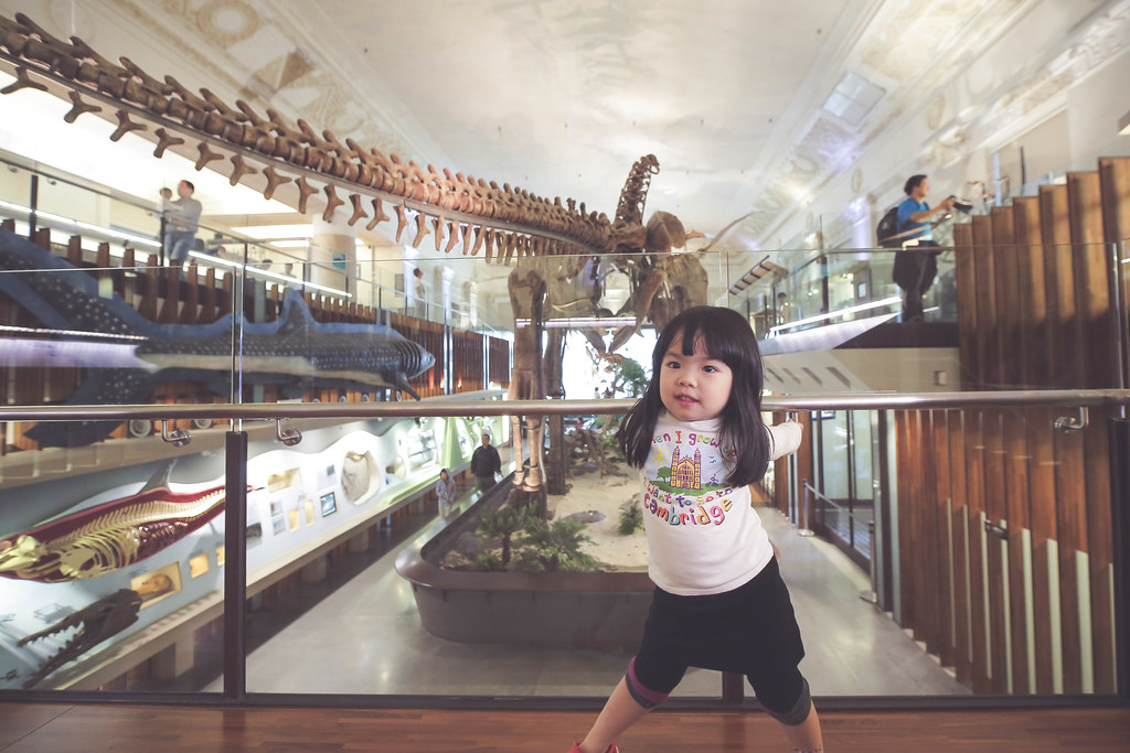 週末來看恐龍