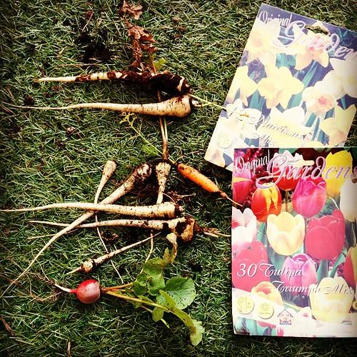 De laatste oogst, en bloembollen planten. #balkontuin