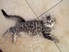 2013-03-31 Kitten 6