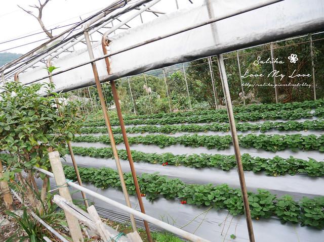 內湖採草莓圃咖啡下午茶 (25)
