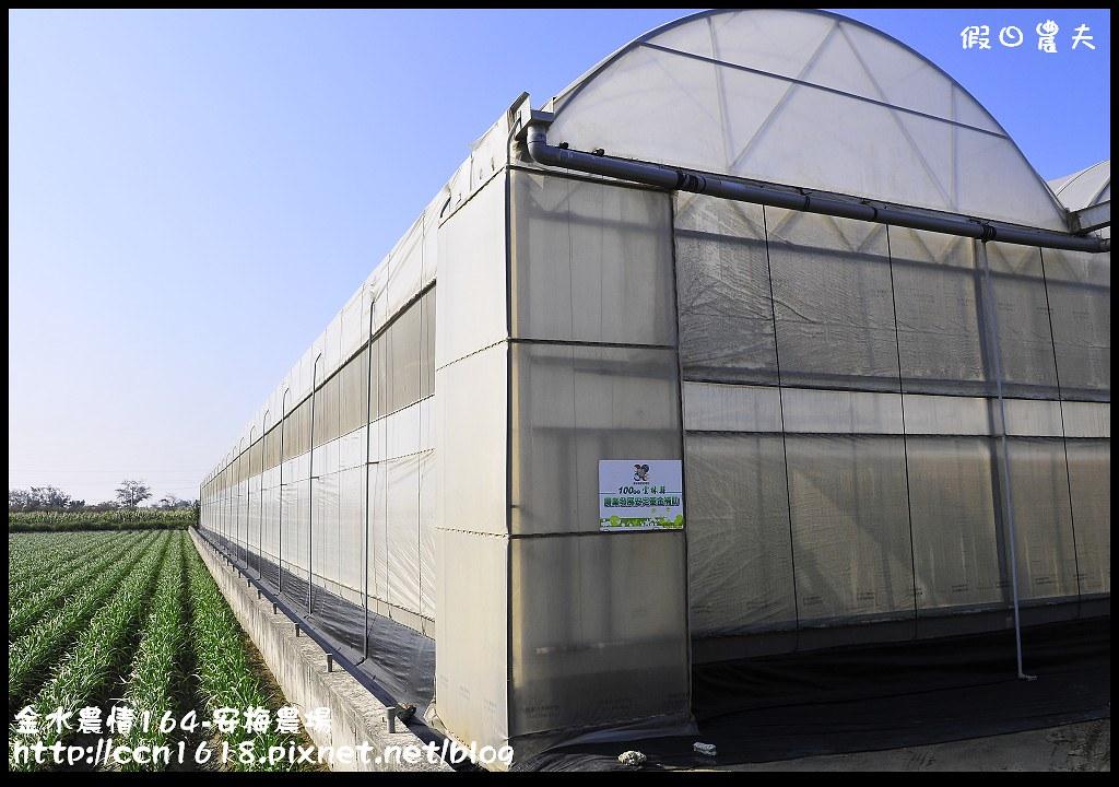 金水農情164-安梅農場_DSC8315