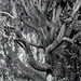 Small photo of Arbre(Lagorce)