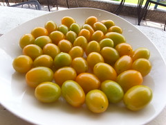 五月盛產的小蕃茄。(圖片來源:小跳)