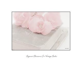 Pink Begonias On Vintage Books