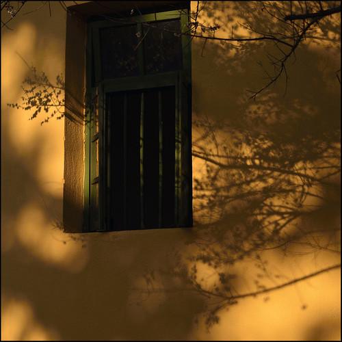 sunset lightandshadows 夕陽 yellowwall fujianprovince 光影 whitebloom 白花 福建省 中華人民共和國 chinaimpression 中國印象 黃牆 maymargy nikkor28300mm peoplesrepofchina nikond800e maylee廖藹淳 fdsc5844