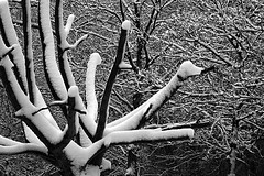 Nature - Winter