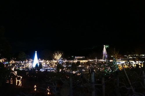 Flower Fantasy 2015 illumination at Ashikaga Flower Park 09